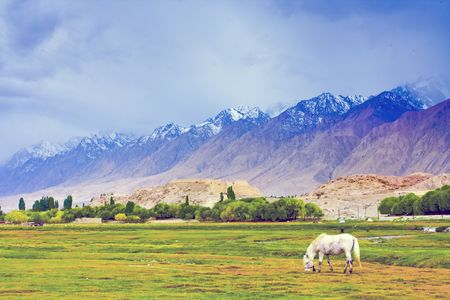 The Pamirs in Xinjiang grassland scenery photo