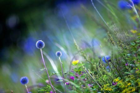 blue flowers: Summer flowers in full bloom Stock Photo
