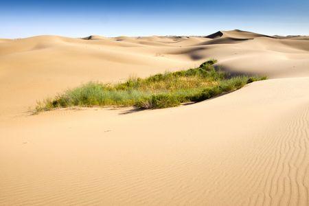 arenas movedizas: La �nica planta restante en el desierto Foto de archivo