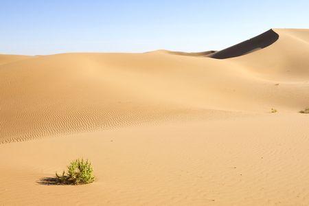 arenas movedizas: La �nica planta que queda en el desierto