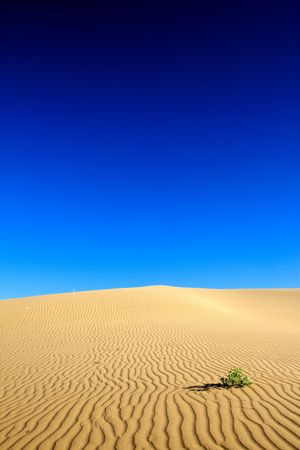 quicksand: The only remaining plant in the desert