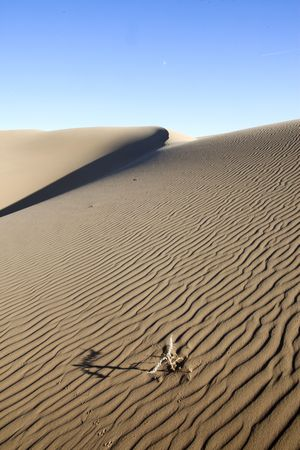 quicksand: Died in the desert plants and projection