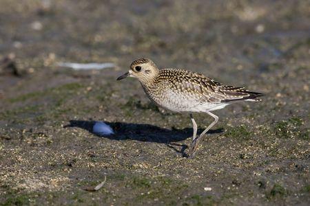 curare teneramente: Cara la protezione degli uccelli - spot gold Heng