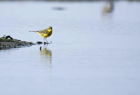 Aves de pesca  Foto de archivo - 5937652