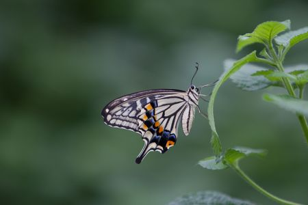 The beautiful butterfly photo