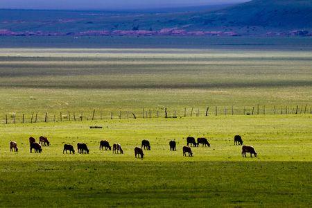 Beautiful China Inner Mongolia steppe