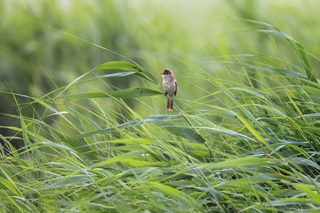 hebei: Life in hebei, China WeiYing wetland bird Stock Photo
