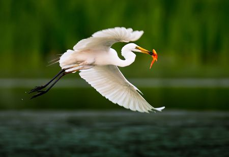 In Beijing, China park river catch fish eat egrets Stock Photo