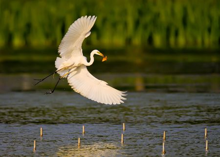 and egrets: In Beijing, China park river catch fish eat egrets Stock Photo