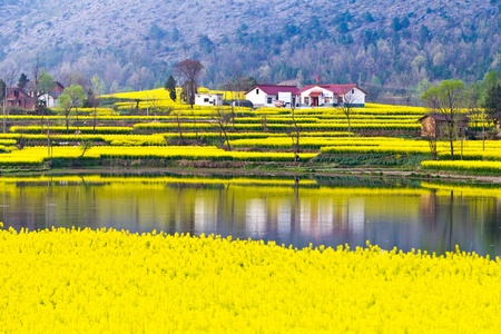 China northern shaanxi rural spring scenery blossoming plants turn photo