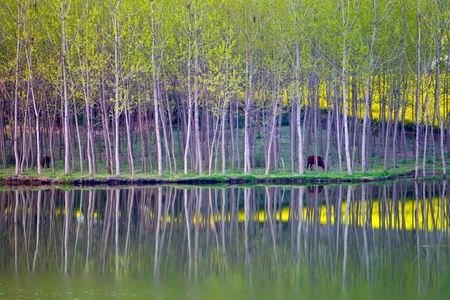 China northern shaanxi rural spring scenery blossoming plants turn