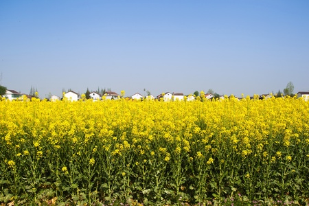 North China open with flowers of rural landscape photo