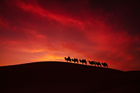 Walking in a desert of sunset camel photo