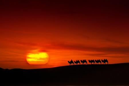 Walking in a desert of sunset camel