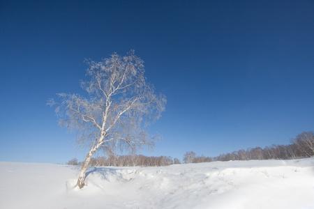 China s Inner Mongolia plateau winter beautiful scenery photo