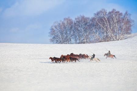 herding: Winter in China s Inner Mongolia grasslands on snow Mercedes in the horse