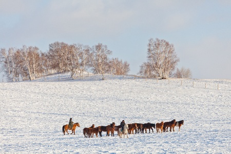 mongolia horse: Winter in China s Inner Mongolia grasslands on snow Mercedes in the horse