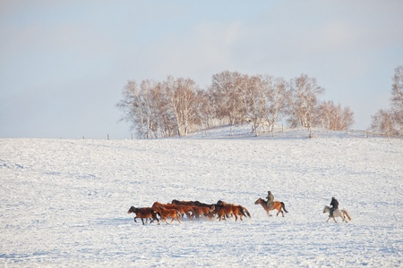 Winter in China s Inner Mongolia grasslands on snow Mercedes in the horse photo