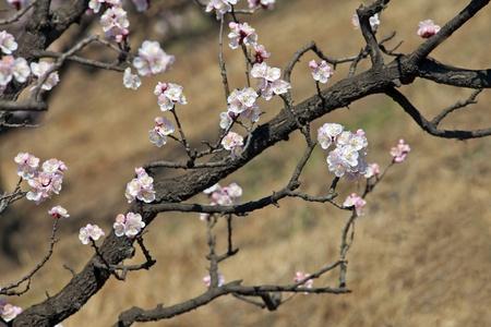 Flowers bloom in spring photo