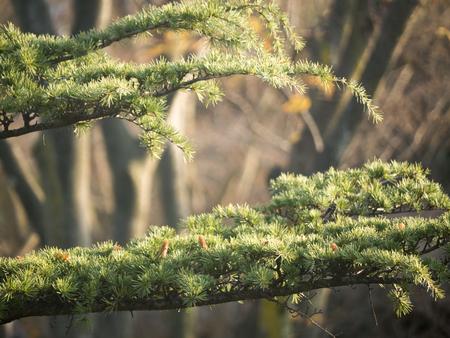나뭇 가지 스톡 콘텐츠
