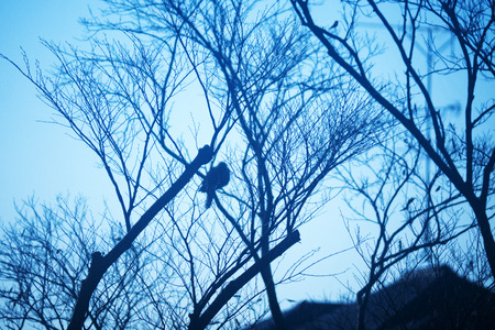 bird on a tree 版權商用圖片
