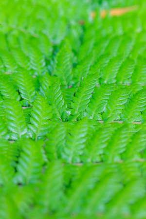 Closeup picture of tropical fern leaf Archivio Fotografico