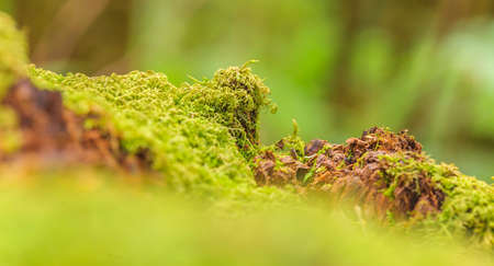 Macro capture of a moss-covered tree trunk with blur photographed during the day in Australia in March 2015