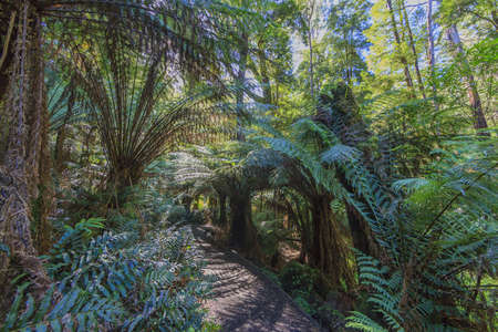 Picture of a path through the Great Otway National Park in South Australia photographed during the day in the sunshine in March 2015
