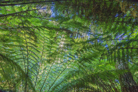 Photograph of palm leaves and fern fronds as a canopy photographed in the Great Otway National Park in South Australia during the day in March 2018