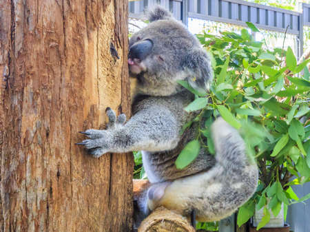 Photo of a koala bear photographed during the day in March 2015