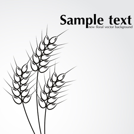 wheat grass: Abstract wheat background