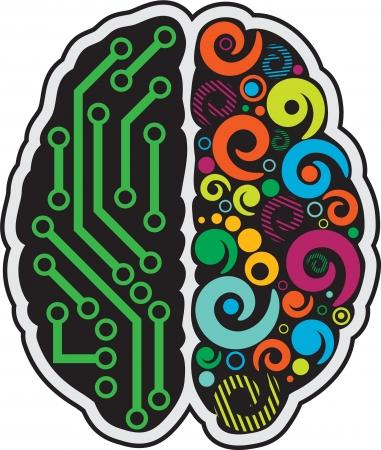 cerebro blanco y negro: Cerebro humano Vectores