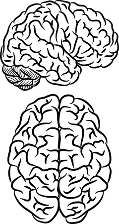Brain silhouette Stock Vector - 17230928