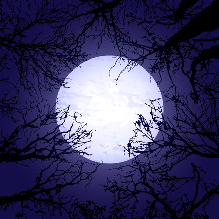 tree silhouettes: Background with black tree silhouettes and big moon