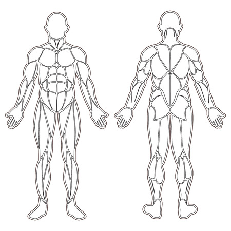Human body silhouette with all muscles isolated on white Ilustração
