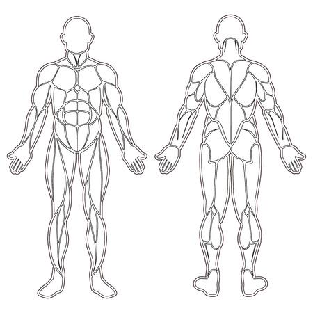 silueta humana: silueta del cuerpo humano con todos los músculos aislados en blanco