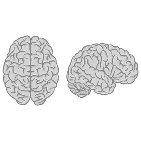Gray brain silhouettes set