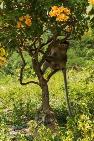 hidden monkey photo