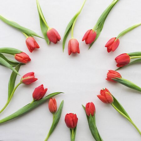 Heart made of red tulips on white background with copy space. Love concept for Valentines day or Mothers day. Spring flowers..