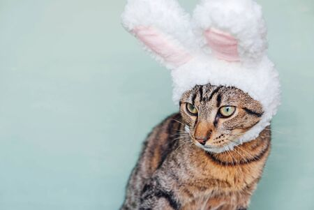 Happy Easter. European Shorthair young cat wearing funny bunny ears against pastel green background, closeup. Mackerel tabby kitty dressed as rabbit, close up. Space for text. Stock Photo