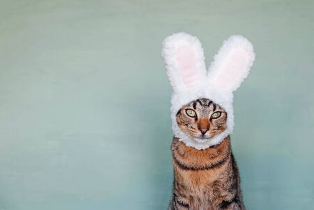 Happy Easter. European Shorthair young cat wearing funny bunny ears against pastel green background. Mackerel tabby kitty dressed as rabbit, close up.