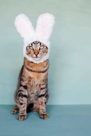 Happy Easter. European Shorthair young cat wearing funny bunny ears against pastel green background. Mackerel tabby kitty dressed as rabbit, close up. Stock Photo