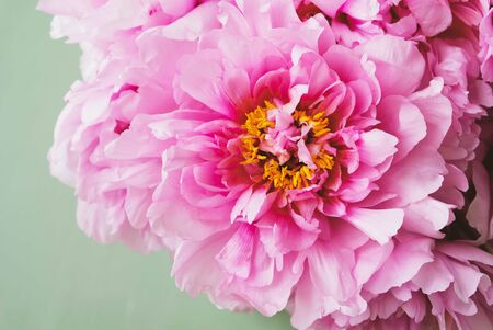 Beautiful bouquet of fresh pink peony flowers in full bloom on mint green background, close up, top view. Copy space. Mother's day, Birthday card. Still life with spring blossoms.