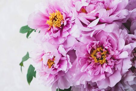 Beautiful bouquet of fresh pink peony flowers in full bloom on beige background, close up, top view. Copy space. Mother's day, Birthday card. Still life with summer blossoms. Stok Fotoğraf