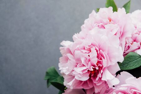 Beautiful bouquet of fresh pink peony flowers in full bloom on gray concrete background, close up, top view. Copy space. Mother's day, Birthday card. Still life with spring blossoms.