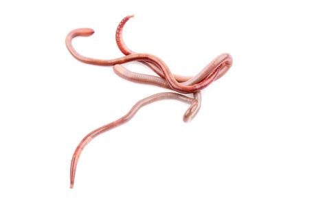 wiggler: worm