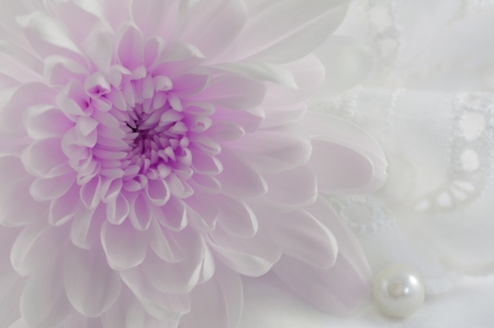 Romantic abstract background with purple chrysanthemum, one pearl and white lace suitable for wedding invitation card