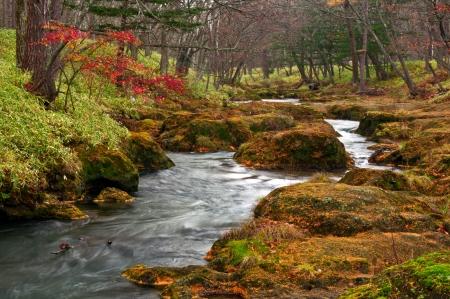 Vreemd landschap van rivier stroomt op mistige bos bij regenachtig late herfst seizoen