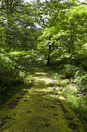 shadowy: Cool place on the mossy empty shadowy footpath in the dense green forest at a hot summer day  Stock Photo