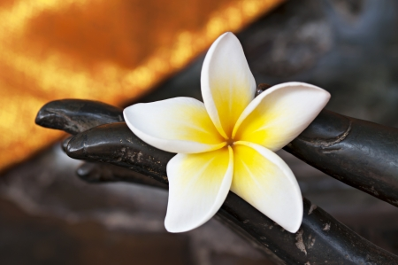 Concept of meditation with Bud of white frangipani flower in the hand of Buddha bronze statue
